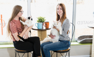 Owners of Minneapolis cat cafe Cafe Meow sit at a table with two cats.